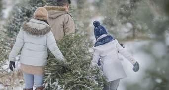 Товар першої необхідності: Франція починає продаж різдвяних ялинок