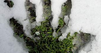 Загадочная миссия: в Киеве коммунальщики стригут газоны, когда идет снег