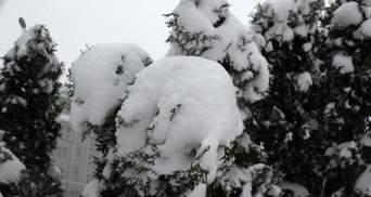 В Украине выпало до 8 сантиметров снега: в каких областях