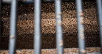 Чиновника Держрезерву підозрюють у розтраті зерна на 2,8 мільйона гривень: деталі