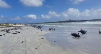 Не удалось спасти: на побережье Новой Зеландии выбросились 126 дельфинов – фото