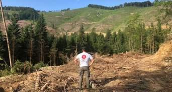 Не обманывайте себя: Карпатский регион – в реальной опасности, – ООН о рубке лесов