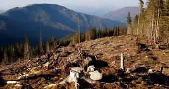 Грозит большая экологическая катастрофа, – активист о вырубке лесов в Карпатах