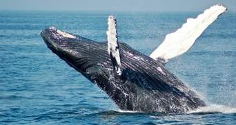 Скелет кита, якому 5 тисяч років:  у Таїланді виявили рідкісну знахідку – фото
