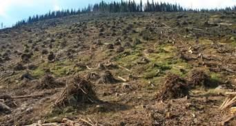 Українські політики спекулюють на проблемі захисту довкілля, – експерт