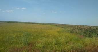 В Одесской области предприниматели пытались присвоить земли на 80 миллионов