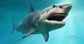 В Египте акула напала на женщину во время дайвинга: фото и видео 18+