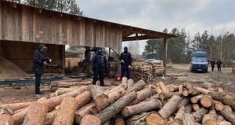 Незаконна порубка лісу: на Волині проводять масштабні обшуки – фото, відео