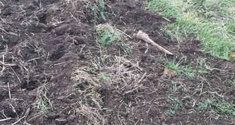 Поле засіяне кістками: на Запоріжжі фермер зорав старе єврейське кладовище – фото
