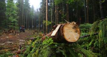 Правительство значительно ограничило вырубку лесов в Карпатах