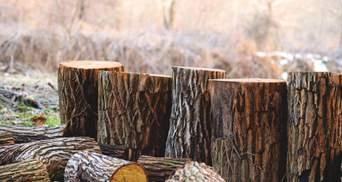 Еврокомиссия заявила о победе в арбитраже с Украиной касательно леса-кругляка