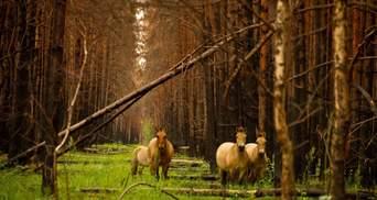 Чернобыльский заповедник добавили в перечень природоохранных зон мира