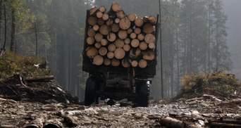 Вырубка лесов на Житомирщине: браконьеры нанесли ущерб на 6,3 миллиона гривен