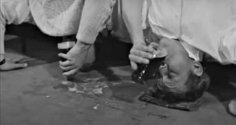Развлечение для завсегдатаев пабов: как выпить пиво вверх ногами – видео
