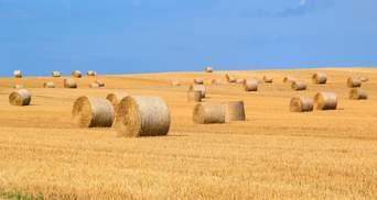 Зниження ПДВ підтримає галузь, яка постраждала від посухи та пандемії, – агровиробники