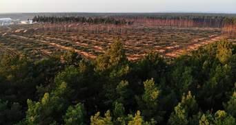 Tesla таки побудує завод у Німеччині: суд зняв заборону на кліринг лісу