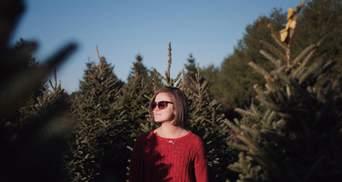 Ялинка-нелегалка: як правильно вибрати законне дерево на свята