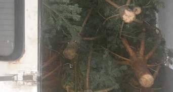 Хотел продать нечипированные елки: у мужчины изъяли микроавтобус и товар – фото
