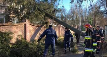 Прикарпатье накрыла непогода: из-за ветра деревья попадали на дома и дороги – фото