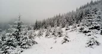 В Карпатах на Новый год ухудшится погода: там объявили первый уровень опасности