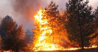 Пожары в Луганской области: ВСК вызывает Резникова и хочет отстранить главу Луганской ГСЧС