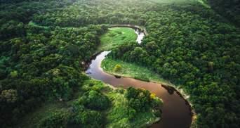 Леса Амазонии могут стать засушливой равниной – их уже не спасешь: неутешительный прогноз