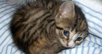 Менш, ніж у 2019: за рік кияни приютили понад 750 котів і собак