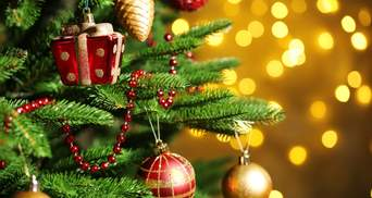 Где во Львове сдать елку на утилизацию: адреса пунктов приема