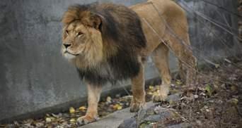 Київський зоопарк заманює відвідувачів знижками: на час локдауну поступились у вартості квитка