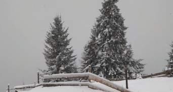 Более 50 сантиметров снега: какие области больше всего замело