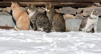 Прогноз погоды на 20 января: в Украине наконец немного потеплеет