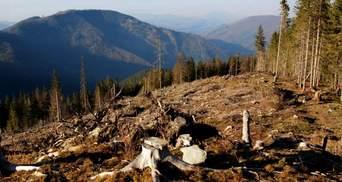 Экоактивисты не спешат поднимать проблему вырубки лесов в Украине: чем это грозит
