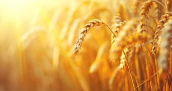 Україна поступилася лише США в експорті зернових