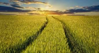 Як захистити зернові та збільшити врожайність