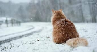 Мокрый снег, гололедица и шквальный ветер: украинцев предупредили об ухудшении погоды