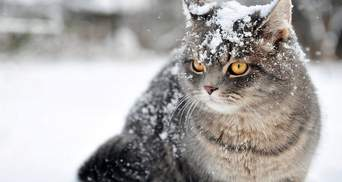 Прогноз погоды на 28 января: в Украине и будет снежно и дождливо