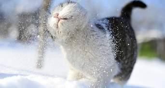 Снег и гололедица: прогноз погоды во Львове и области на 28 января