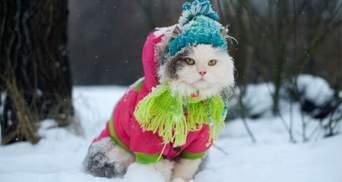 Прогноз погоди на 13 лютого: в Україні без снігу, але вдарять морози