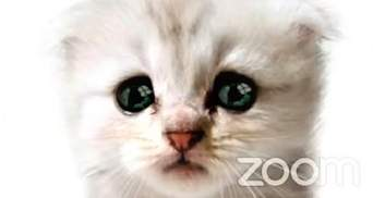 Курйози у Zoom: адвокат з'явився на онлайн-засіданні суду у масці котика – кумедне відео