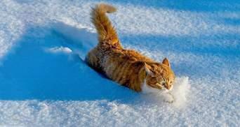 Львов обильно засыпало снегом: машины замело доверху – фото и видео