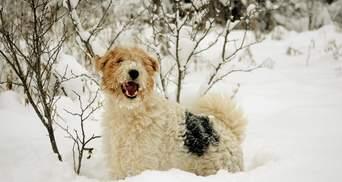 Сніг та до -15 градусів: прогноз погоди у Львові та області на 16 лютого