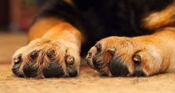 Розправа над улюбленцем: на Сумщині собаку закололи вилами і викинули у смітник