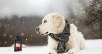 Наконец-то без осадков: прогноз погоды во Львове и области на 19 февраля