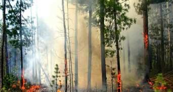 6 тысяч гривен за лесной пожар: Рада повысила штрафы за поджоги экосистем