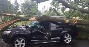 """Во Львове женщина отсудила у """"Львовской политехники"""" 73 тысячи гривен за разбитое деревом авто"""