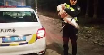 На Вінниччині далекобійник врятував лебедя: де тепер житиме птах
