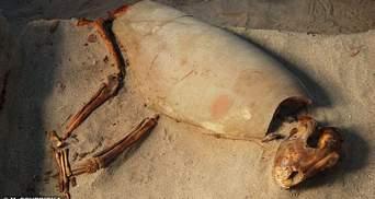 Самое старое на свете: в Египте нашли кладбище домашних животных