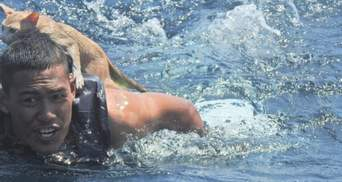 В Таиланде затонуло судно: как моряки спасли с него 4 котят