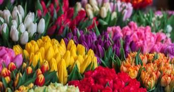 Сколько стоят цветы к 8 марта: цены в городах Украины