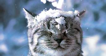 Прогноз погоды во Львове и области на 11 марта: на Львовщине снова будет идти снег